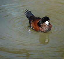 Just Ducky by PaulineHoward