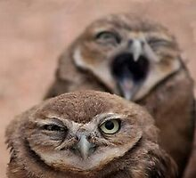 Nag Nag Nag (Annoyed Owl) by SOIL