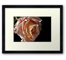 Dreaming Rose Framed Print