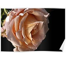 Dreaming Rose Poster