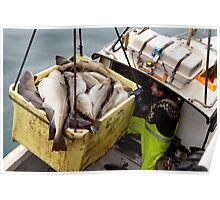 The big catch Poster