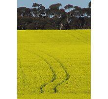 Tracks in Canola  Photographic Print
