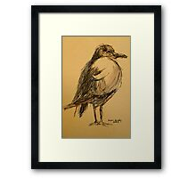 Winter seagull: pen and wash Framed Print