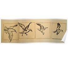 Four flying Seagulls: pen sketch. Poster