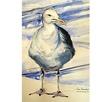 San Francisco seagull: pen and wash Photographic Print