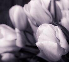 Softness of Spring by Caroline Gorka