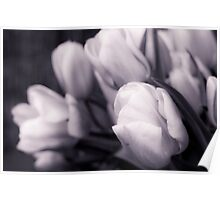 Softness of Spring Poster