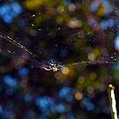 The Web by Elisabeth Dubois