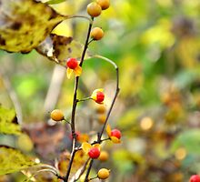 Berries  by ashleyt