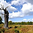 Richmond Park in Autumn by Lisa Williams