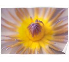 Exotic Pink and Yellow Water Lily Heart Poster