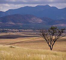 San Rafael Valley by David F Putnam