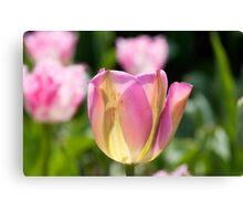 Pinky Green Tulips Canvas Print