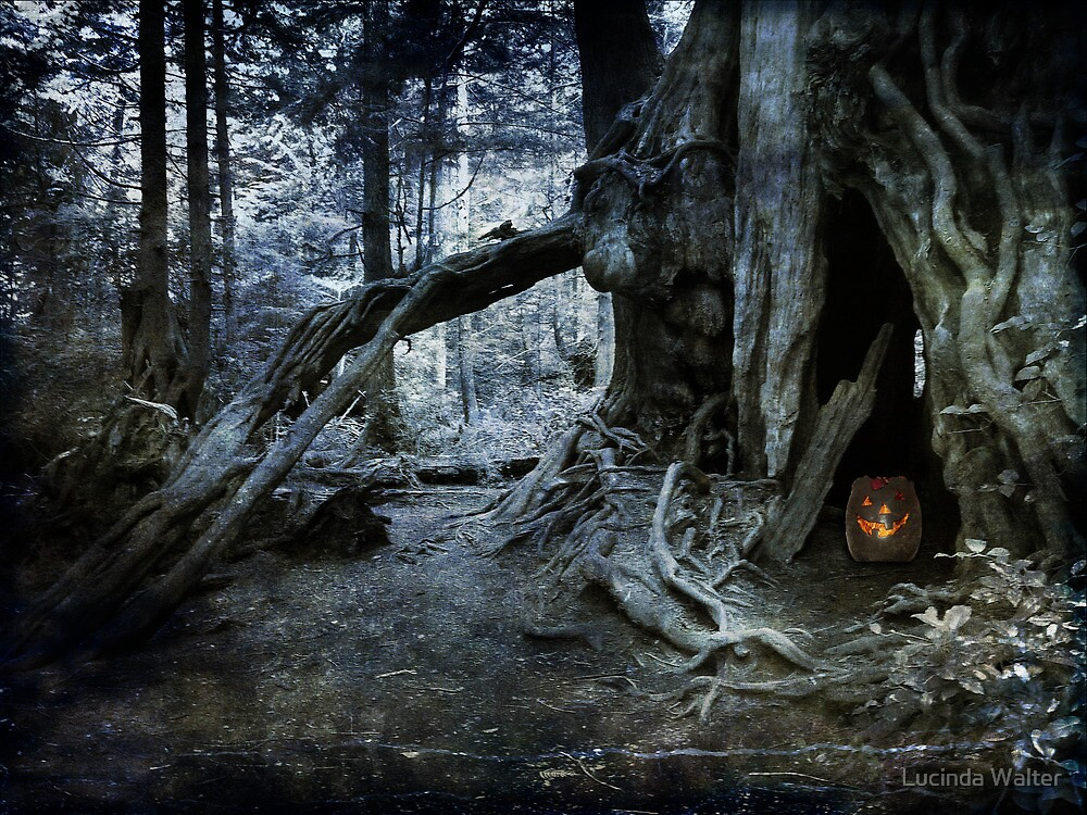 Midnight Forest by Lucinda Walter