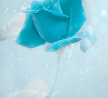 Winter's Rose by ©Maria Medeiros