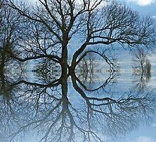 reflective tree by shalisa