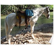 Horseback riding - guided jungle tours Poster