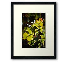 Strawberry Plant in Sunlight Framed Print