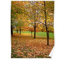 Fall trees - Ottawa , ON Poster