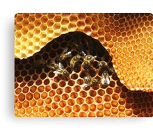 Group of Bees Canvas Print