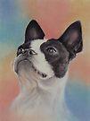 My Sweet Boston Terrier, in pastels by Pam Humbargar