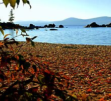 Autumn leaves dance across LakeTahoe sand by Elaine Bawden