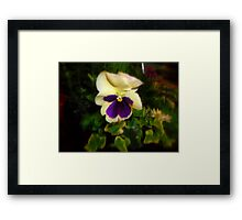 Soft & Gentle Framed Print