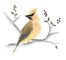 Watercolor Cedar Waxwing by Sarah Countiss