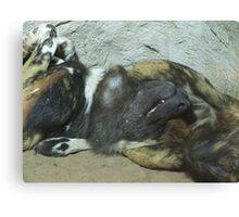 Sleeping painted dog Canvas Print
