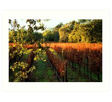 Late Autumn View of Napa Valley 2 Art Print