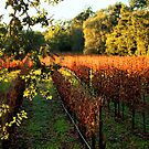 Late Autumn View of Napa Valley 2 by Ellen Cotton