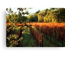 Late Autumn View of Napa Valley 2 Canvas Print