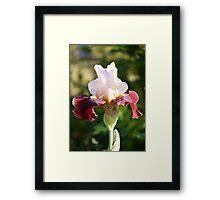 Iris 3 2011 Framed Print