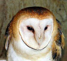 Face of a Barn Owl by vette