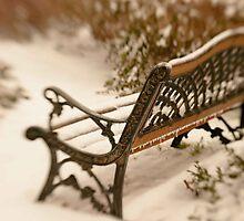 winter dreams by Lynn McCann