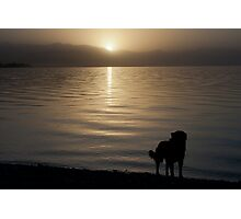 Family dog Photographic Print