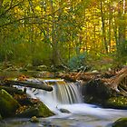 Over the Falls in Fall by photosbyflood