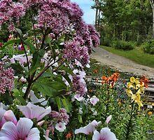 A Beautiful Country Lane by Sandra Foster