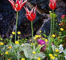Sidewalk Garden - Kobe, Japan by Lynnette Peizer