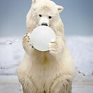 """Polar Bowl"" by John Hartung"
