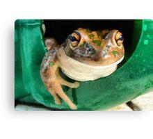 Western Banjo Frog Canvas Print