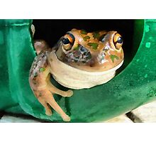 Western Banjo Frog Photographic Print