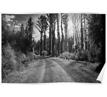 Yellow Dog Road, Marysville  Poster