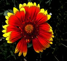 Firey Flower by AT-Photo