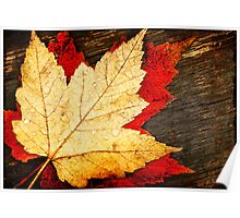 Red and Gold Leaves Poster