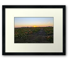 Pumpkin Patch Framed Print