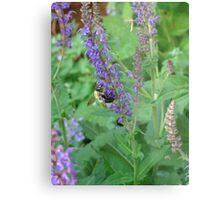 Bumble Bee & Flowers Metal Print