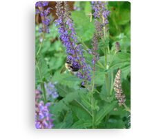 Bumble Bee & Flowers Canvas Print