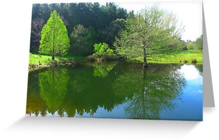 The Duck Pond - Robert Mann by Golden Valley Tree Park
