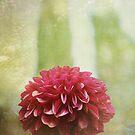 Dahlia Dreams by Lynn Starner